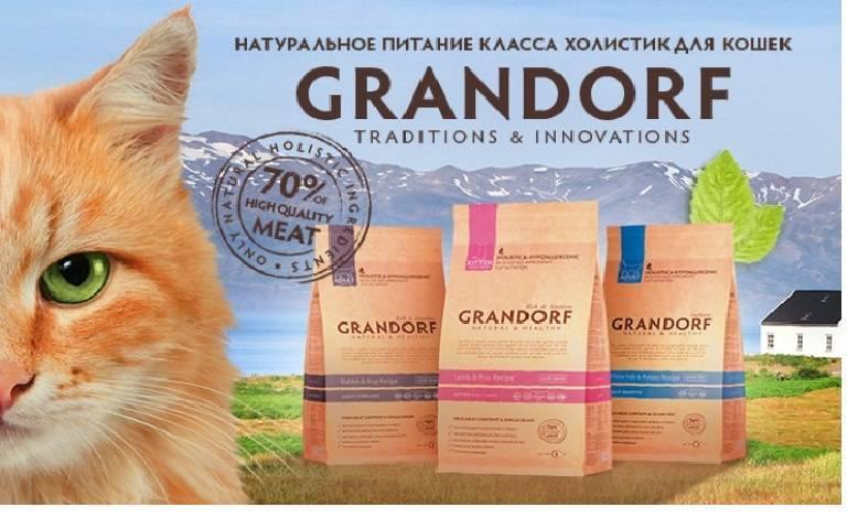 Обзор корма для кошек grandorf