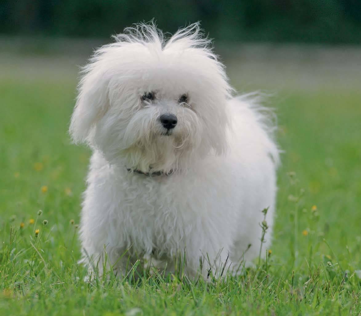Породы домашних собак с фотографиями и названиями