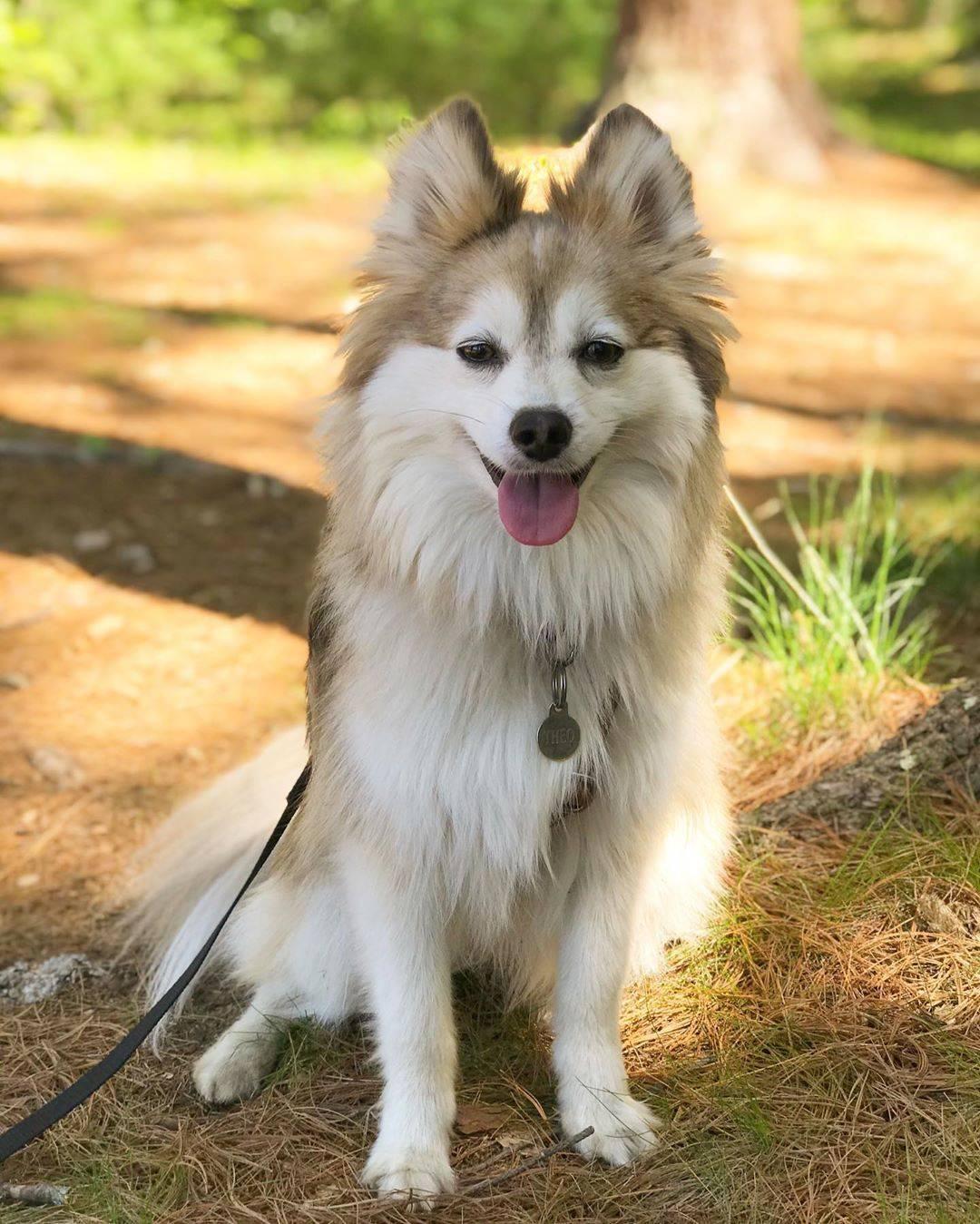 Аборигенные породы собак: список и особенности