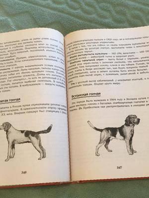 Воспитание собак: как приручить щенка? как правильно воспитать взрослую собаку? особенности коррекции поведения