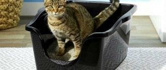 """Подкожные клещи у кошек, заражение, диагностика и лечение   блог ветклиники """"беланта"""""""