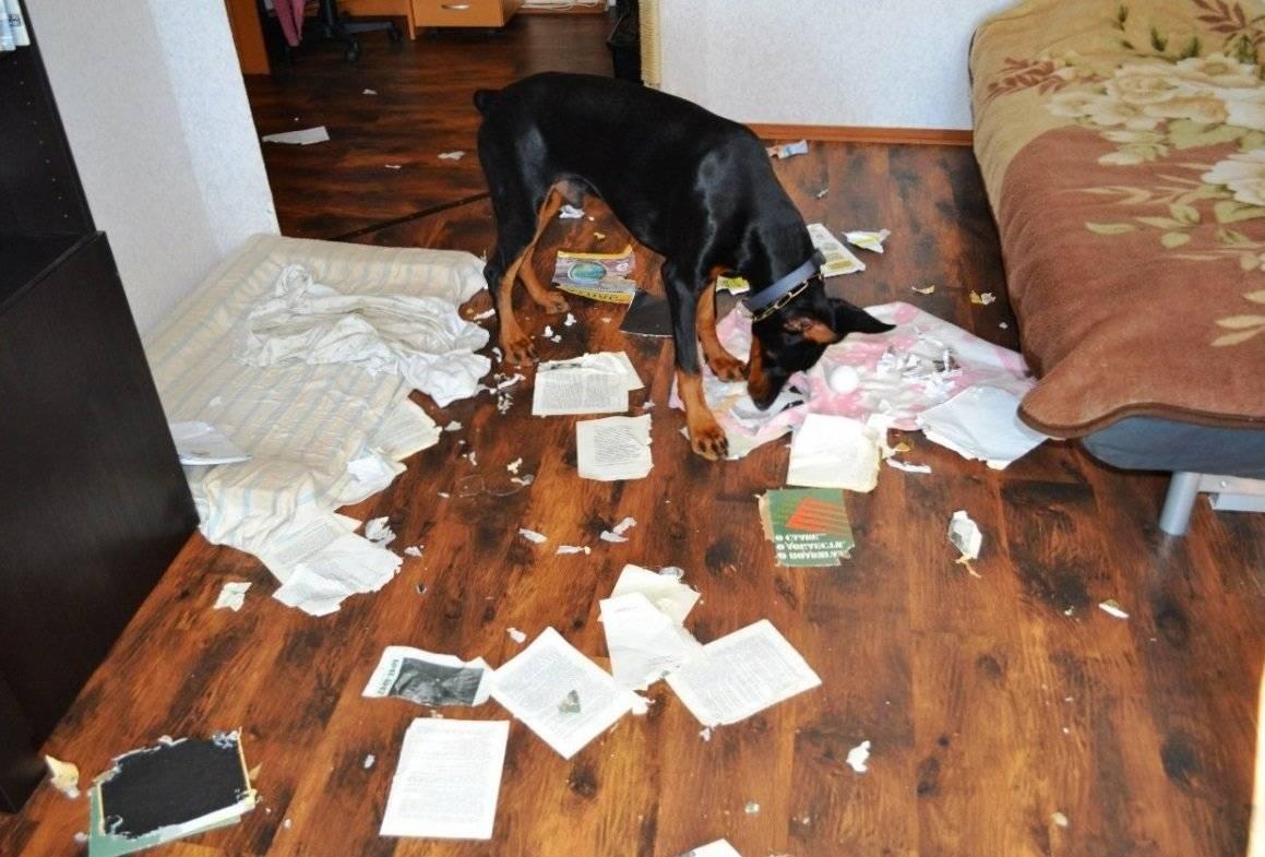 Многие способы, которыми ваша собака разговаривает с вами, оставляют вас в неведении