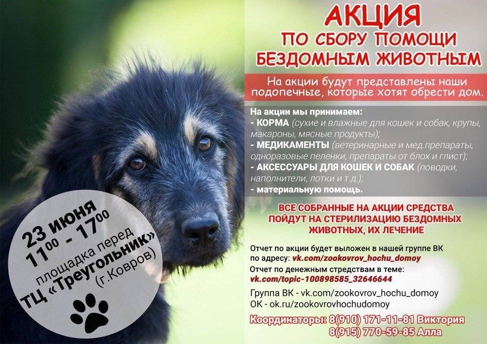 «не оставляй меня на даче!»: как помочь брошенной собаке или кошке