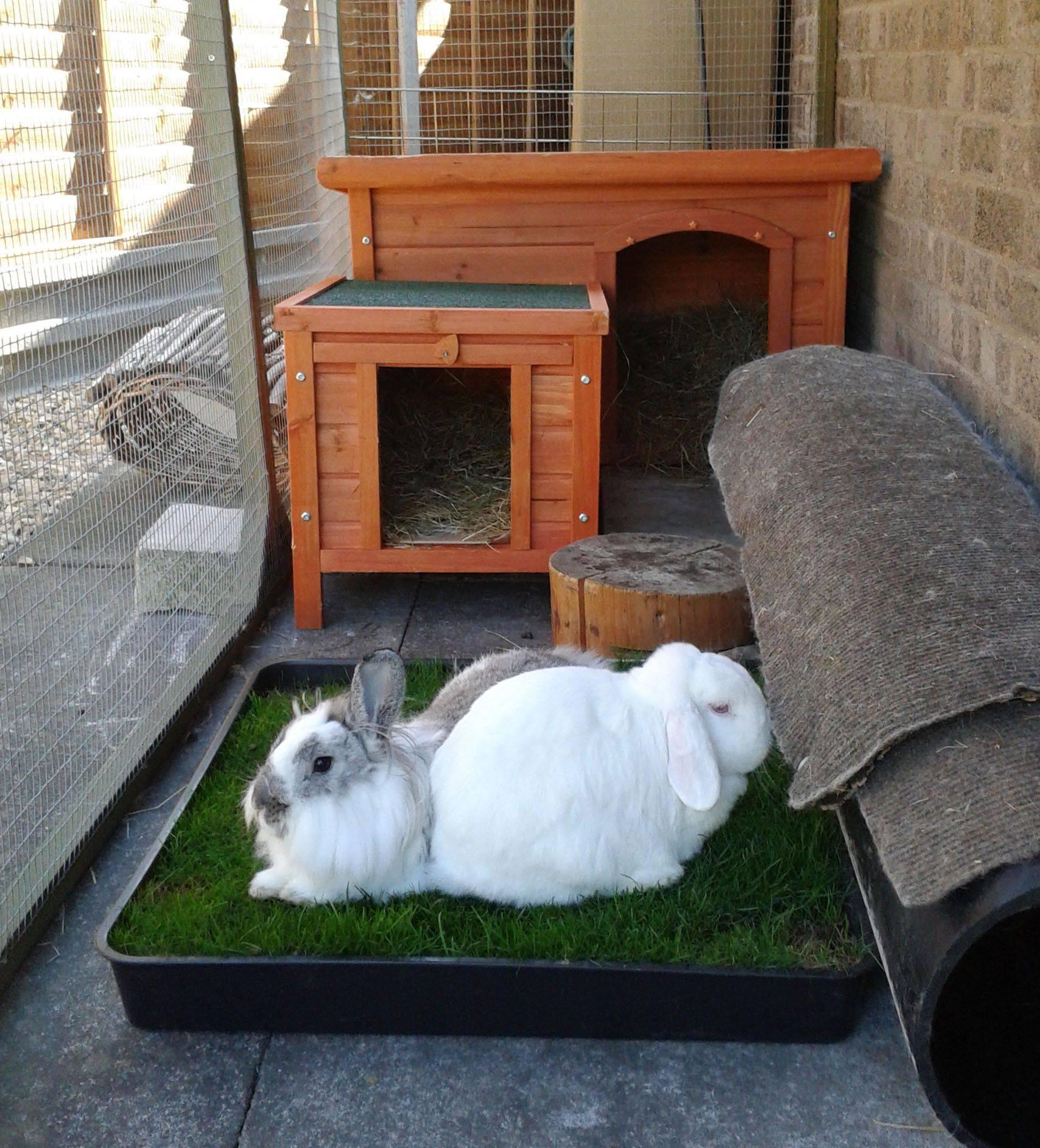 Клетки для кроликов своими руками: все размеры и чертежи, фото, видео