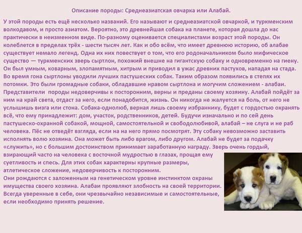 Содержание и воспитание щенков алабая в 2 месяца