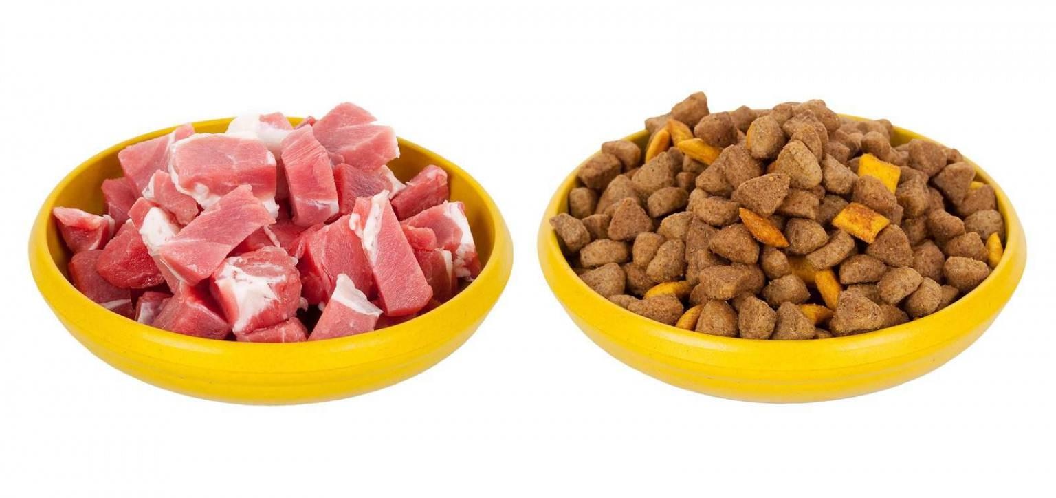 Можно ли кормить собак сырым мясом: опасности кормления, последствия, все плюсы и минусы