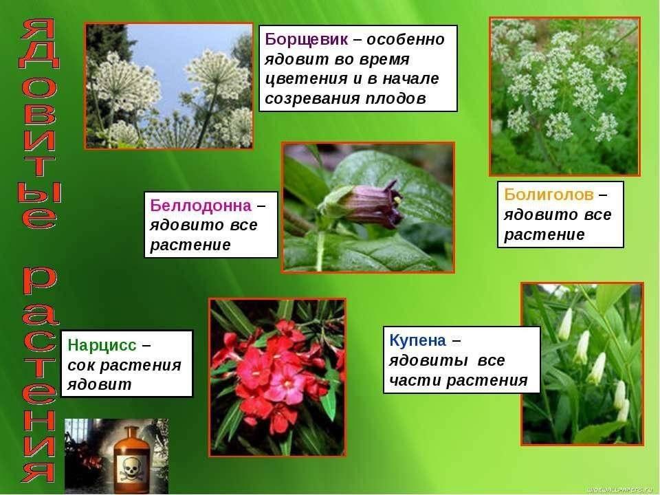 Список и описание ядовитых растений для котов: какие цветы опасны