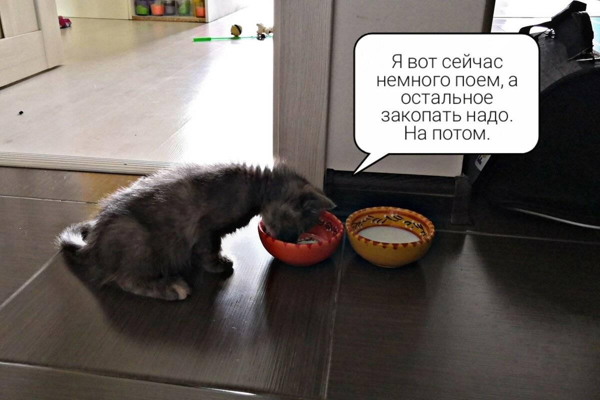 Почему кошка закапывает еду или миску и что это значит