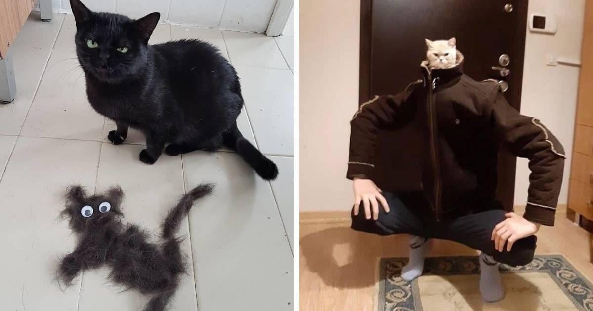 Самые смешные анекдоты про котов и кошек