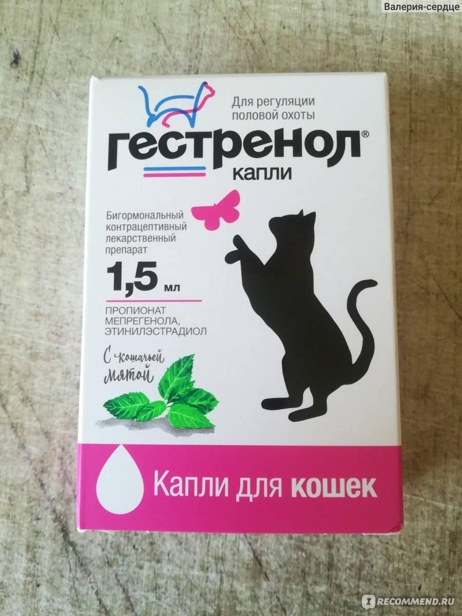 Топ 5 противозачаточных таблеток для кошек