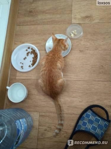 У кота или кошки запор: что делать в домашних условиях, как помочь котенку и взрослому животному сходить в туалет, какой корм давать