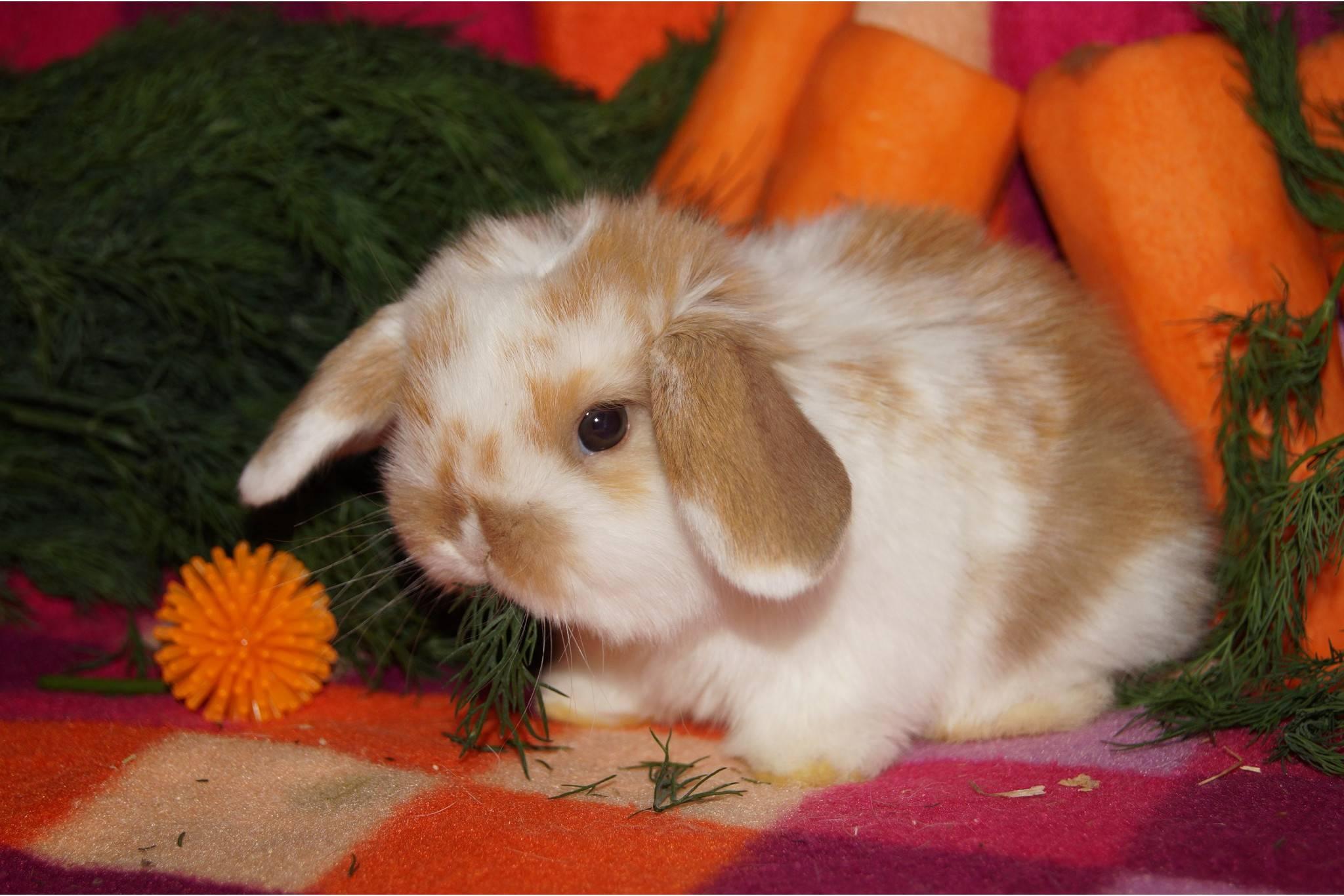 Как назвать кролика – лучшие имена для мальчиков и девочек