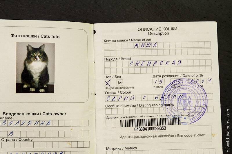 Как заполнить ветеринарный паспорт кошки или собаки правильно