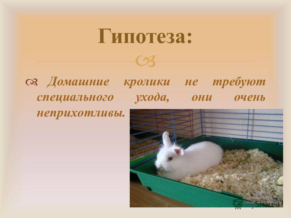 Карликовый кролик — породы, описание, особенности, содержание и уход в домашних условиях (фото и видео)