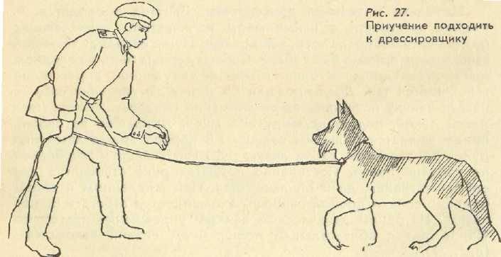 Как научить собаку командам «ко мне!» и «гуляй!»