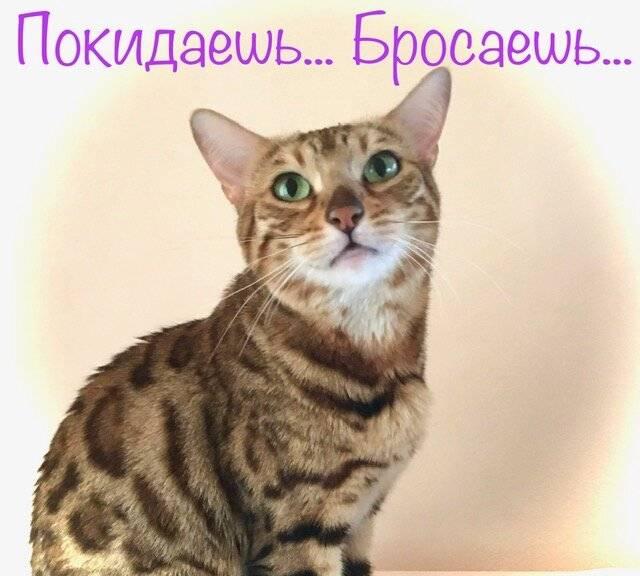 Можно ли оставлять кошку одну дома