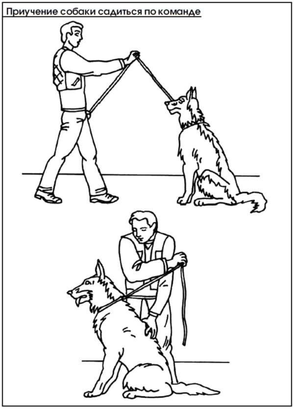 Правила дрессировки взрослой собак с нуля