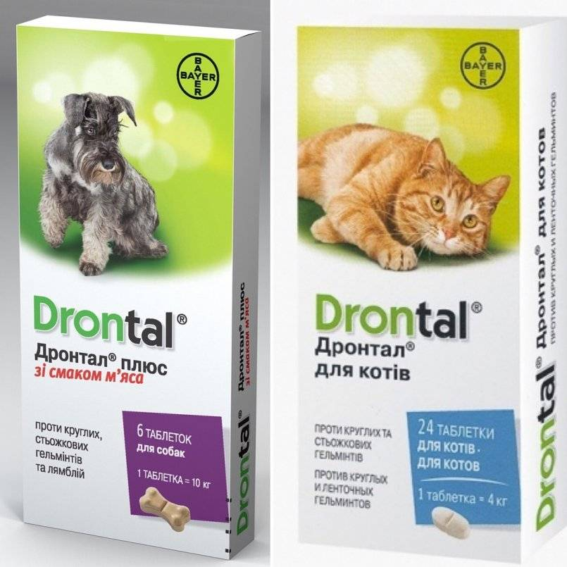 Дронтал для кошек: показания, применение, побочные эффекты