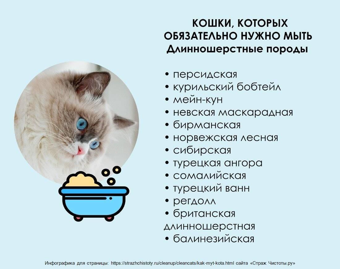Чем кормить персидскую кошку и котенка? в разных возрастах