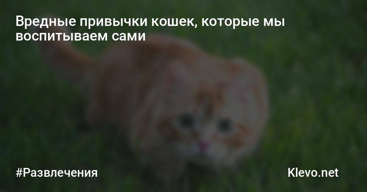 Вредные и полезные привычки кошек