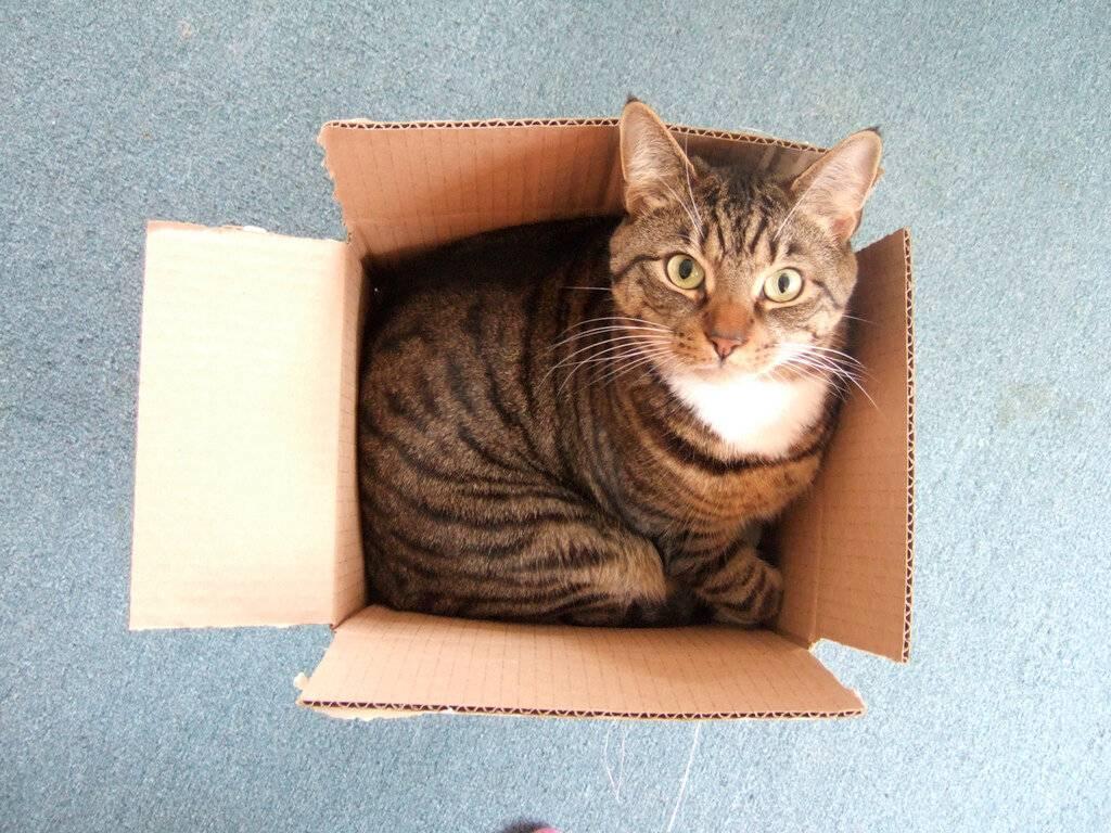 4 причины, по которым кошки без ума от коробок и пакетов