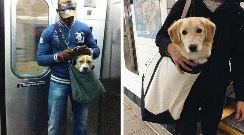 Правила по перевозке собаки в поездах дальнего следования и электричках