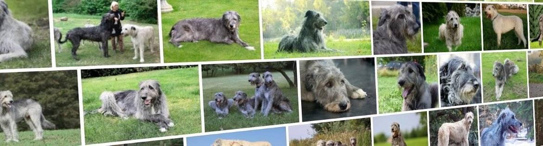 Крупные породы собак. описания, названия, клички и особенности крупных пород собак