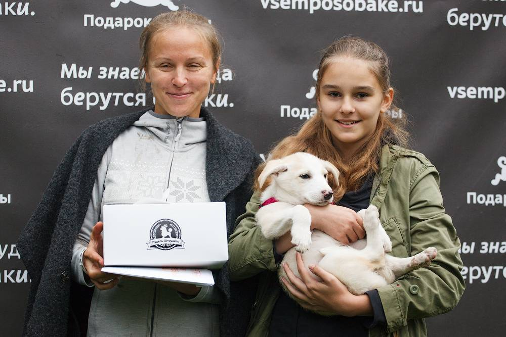 """Выставка собак из московских приютов """"подарок судьбы"""""""