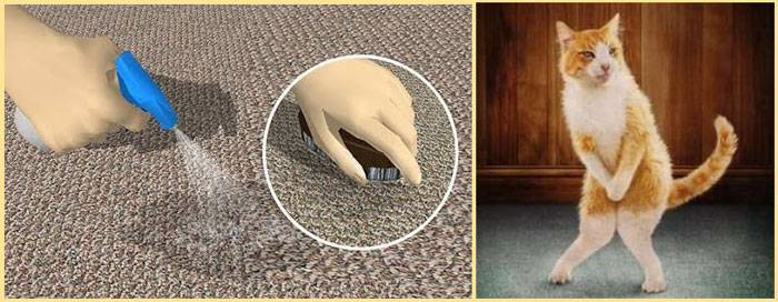 Как убрать запах собаки в квартире, доме: как избавиться домашними средствами, устранить неприятный аромат псины бытовой химией?