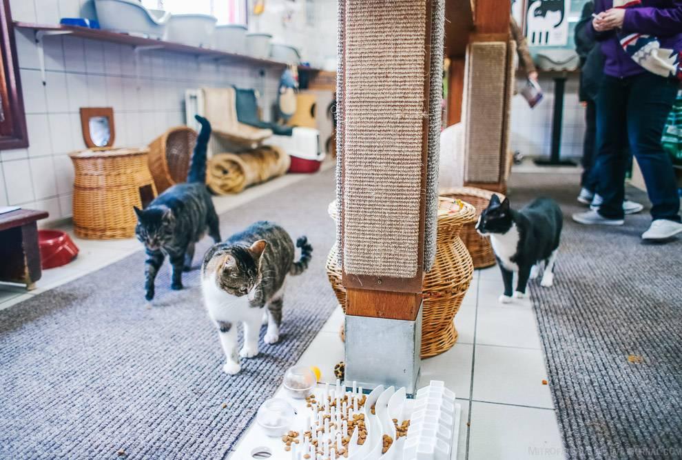 Почему кошки часто умываются