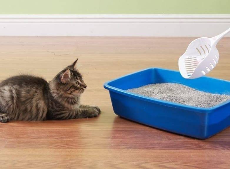 Котёнок не хочет ходить в лоток — что делать