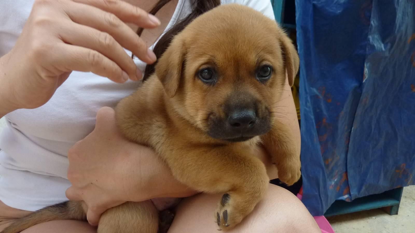 Как назвать собаку девочку – рекомендации по подбору имени для такс, йорка, алабая, лайки и дворняжки