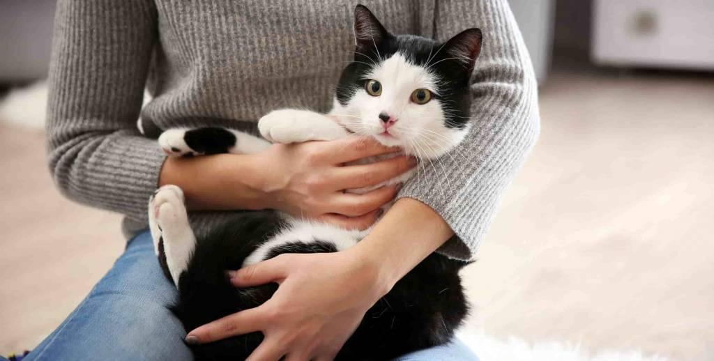 Какую кошку надо завести дома, чтобы в любви был большой успех. и как ее назвать