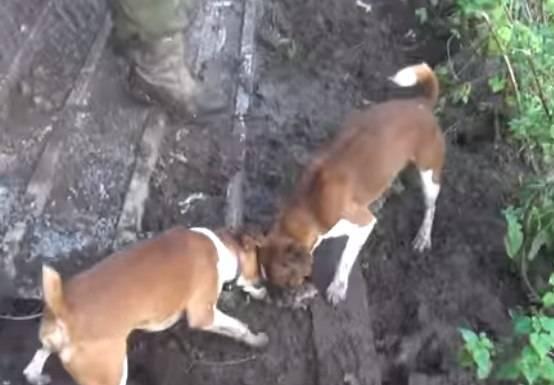 Пражский крысарик собака. описание, особенности, уход и цена породы