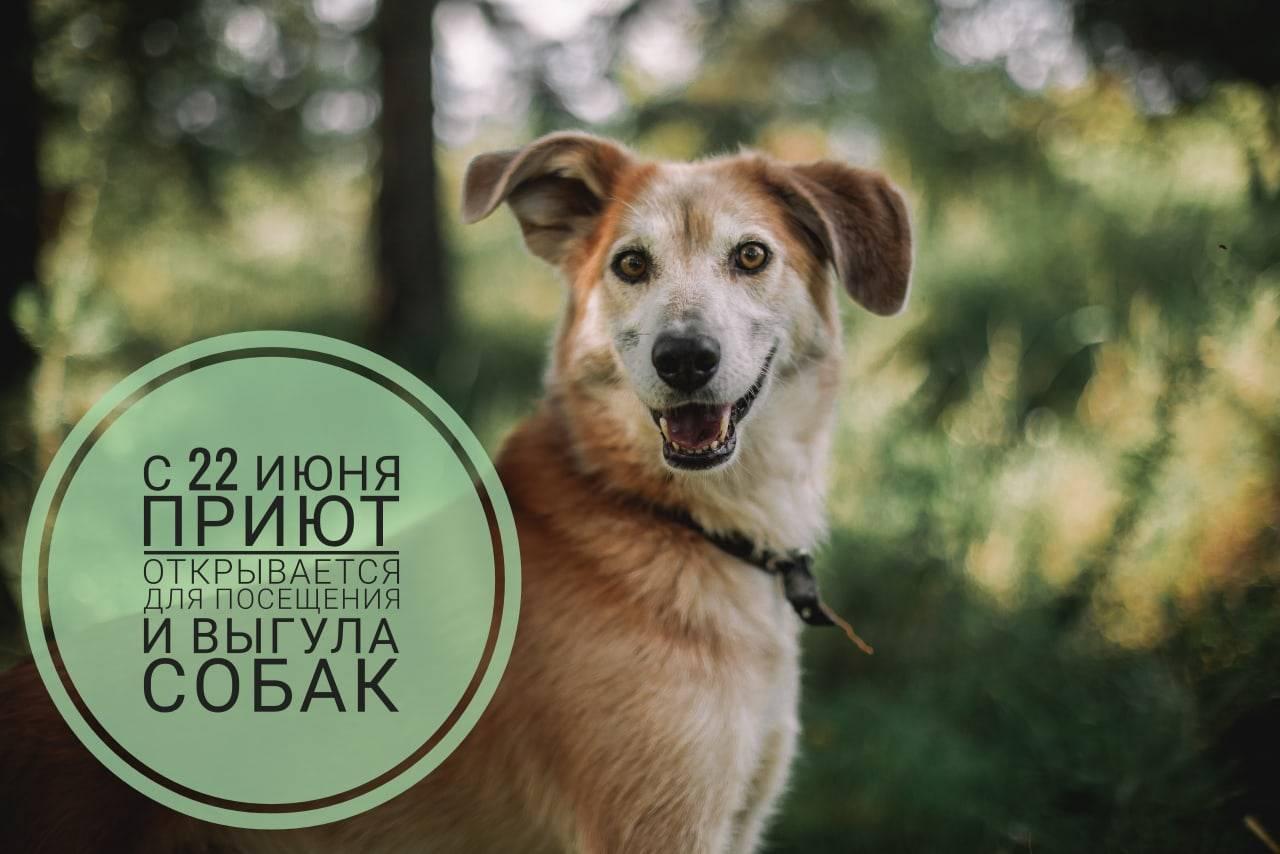«есть люди, которым вообще нельзя иметь собаку» | милосердие.ru