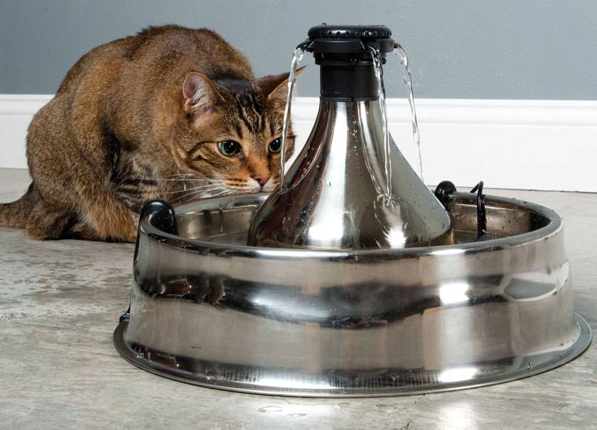 Автопоилка для кошки выбираем лучшую