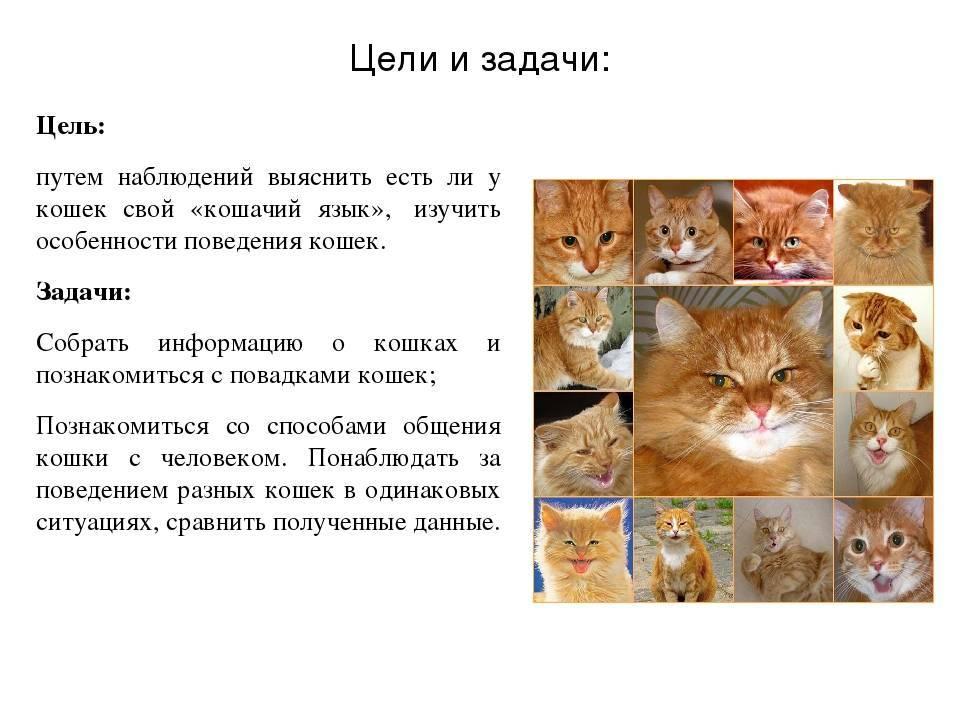Характер и поведение кошек - общение кошек, охота, отношения с людьми   блог о домашних животных