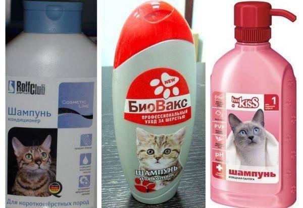 Лучшие капли от блох для кошек и котят