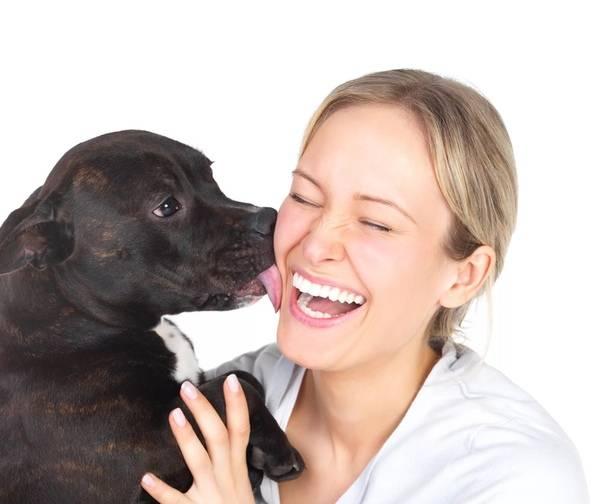 Собака лижет ноги хозяина: норма или патология?