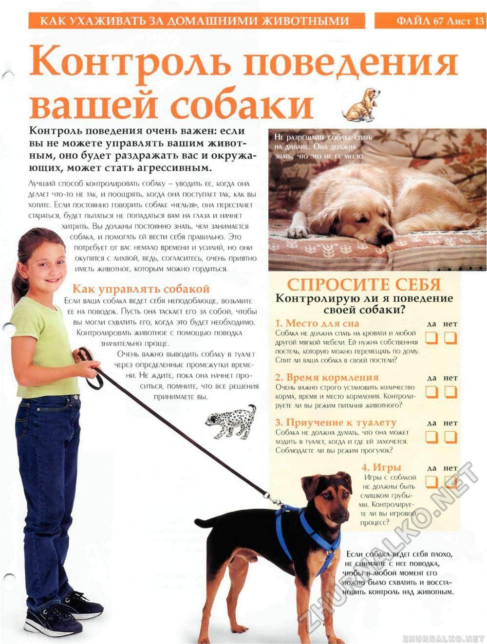 Когда кормить собаку до или после прогулки: изучаем развернуто