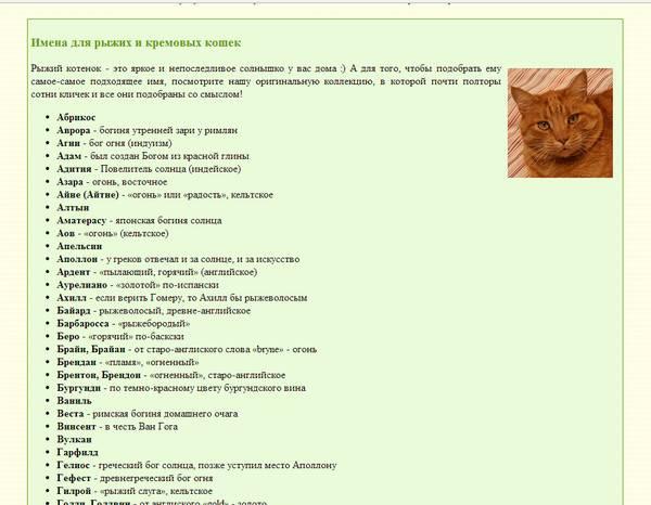 Имена (клички) для кошек девочек | редкие, красивые, легкие, как назвать