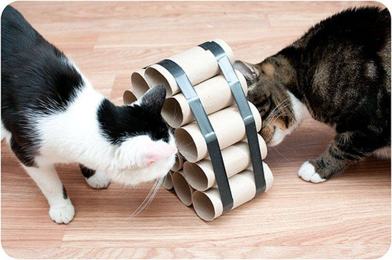 Игры кошки