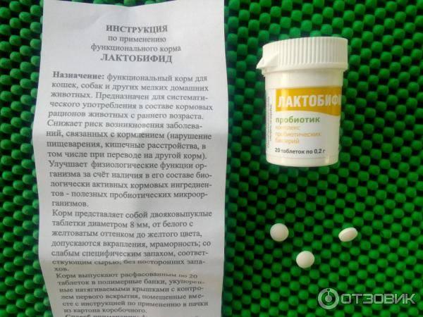 Лактобифид для кошек и собак: инструкция по применению, отзывы, цена - петобзор