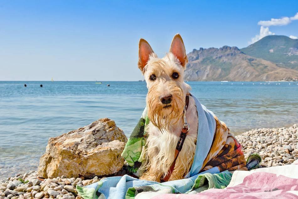 Как отдыхать на море с собакой: проживание в гостиницах и частном секторе