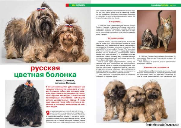 Русская цветная болонка - описание породы