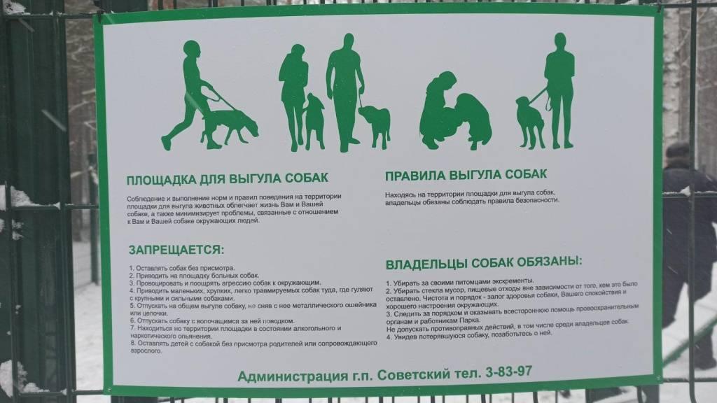Режим дня собаки: график выгула и правила прогулок с питомцем