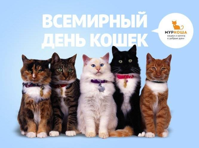 Всемирный день кошек 2021