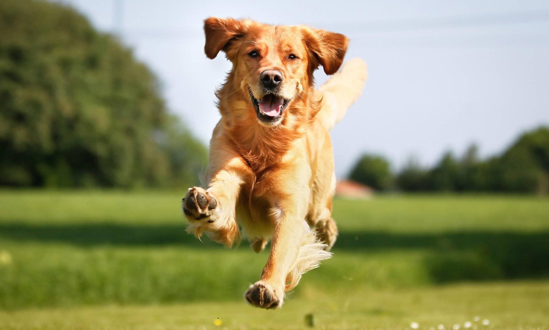 Сколько живут собаки:  как продлить года жизни в домашних условиях