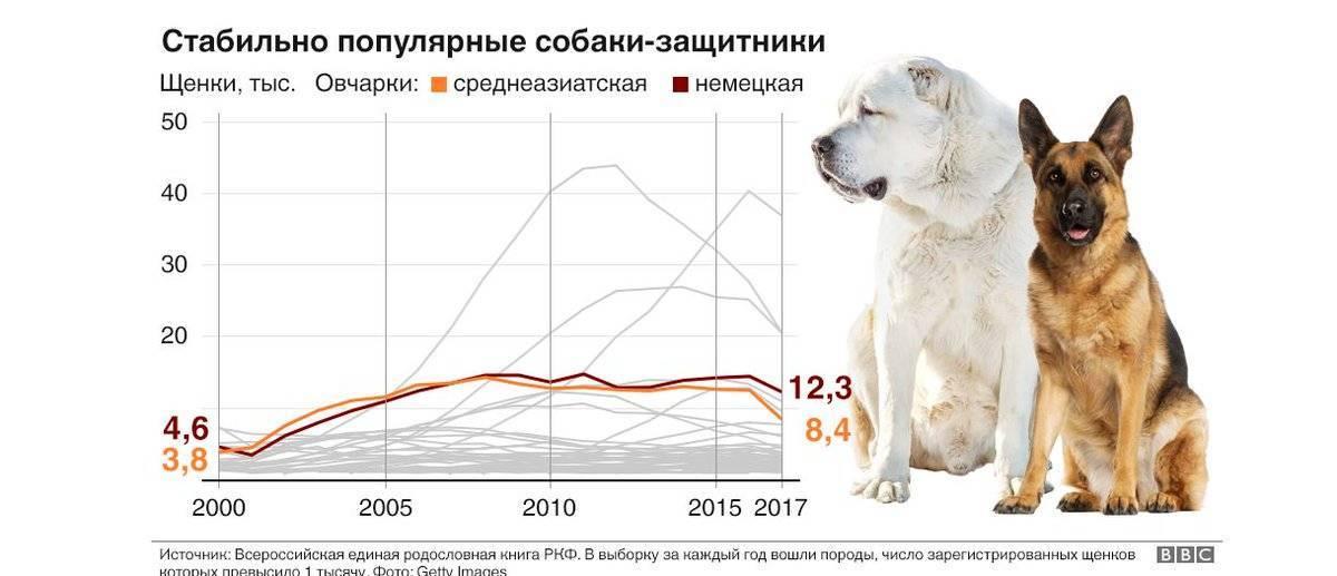 Купить собаку - купить в москве недорого, цена