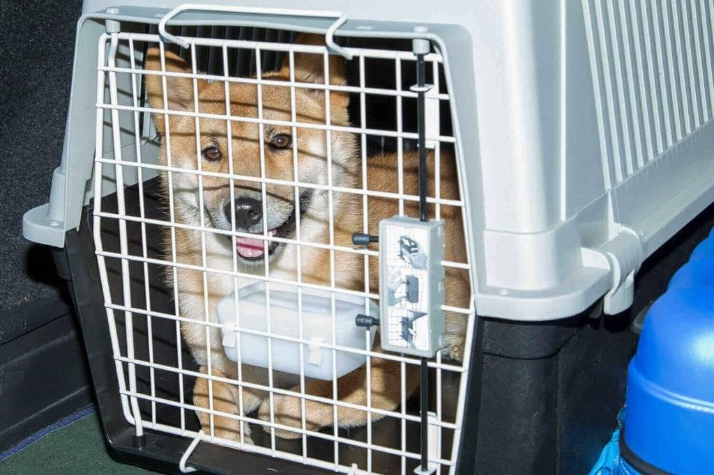 S7 перевозка животных, правила провоза животных в салоне самолета в 2020